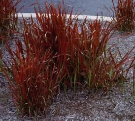 Roten i växten har kapacitet att binda fukt.
