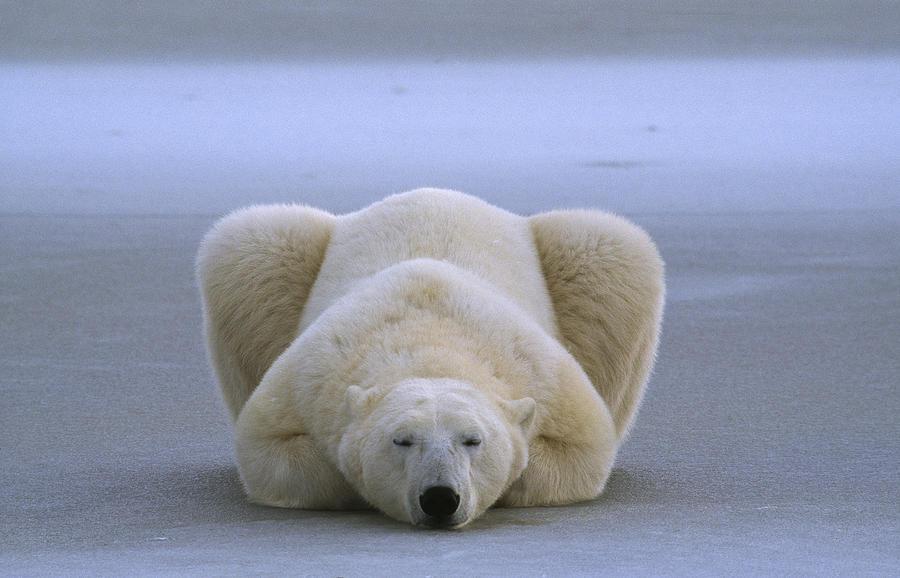 Dags att sova hela kalla vintern